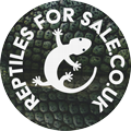 Reptiles for Sale UK
