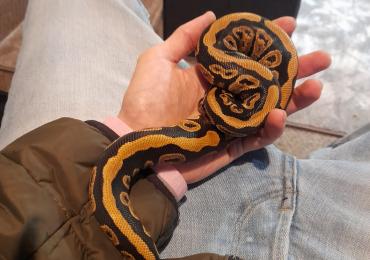 Royal python and full setup