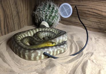 CB16 Female Woma Python