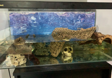 Musk turtles with enclosure